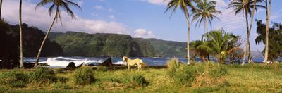 Horse and Palm Trees on the Coast, Hawaii, USA