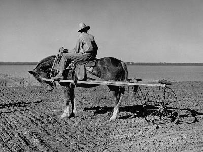 Horse Assisting the Farmer in Plowing the Field-Carl Mydans-Photographic Print