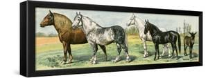 Horse Breeds: Belgian and Percheron Draft Horses, a Trotter, An Arabian, and a Donkey