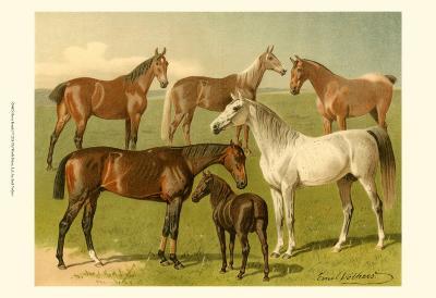 Horse Breeds I-Emil Volkers-Art Print