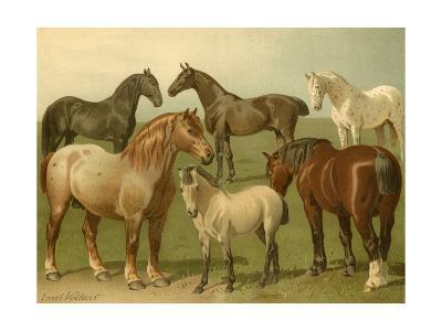 Horse Breeds II-Emil Volkers-Art Print