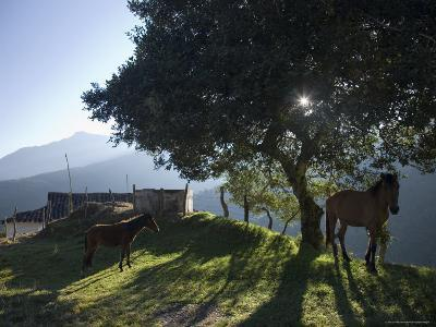 Horse, Colt as Dawn Shines Through Tree by House in Venezuelan Andes-David Evans-Photographic Print