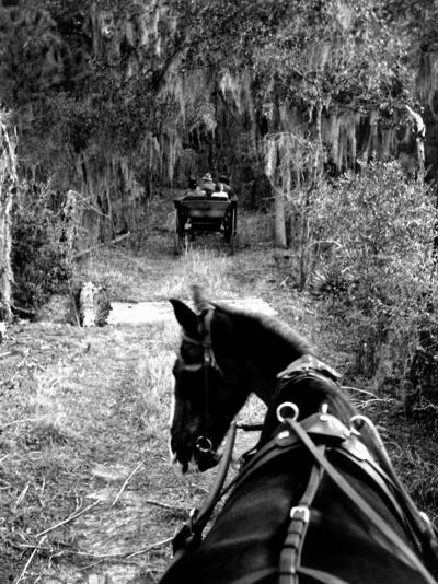 Horse-Drawn Carriages on Road Carrying Passengers to Deer Hunting Party-Alfred Eisenstaedt-Photographic Print