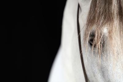 Horse Face Close-Up-Monica Rodriguez-Photographic Print