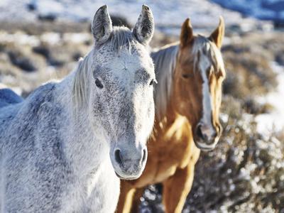 https://imgc.artprintimages.com/img/print/horse-fort-ranch-6_u-l-q1bxsxp0.jpg?p=0