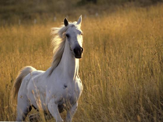 Horse Galloping, Half Moon Bay, California-Jerry Koontz-Photographic Print