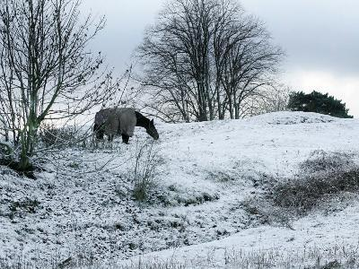 Horse Grazes on a Snow Covered Field in Bearsted in Kent, England--Photographic Print