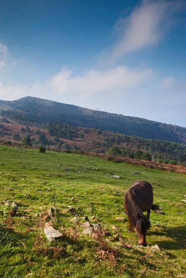 Horse grazing along the Jaizkibel Road, Hondarribia, Guipuzcoa Province, Basque Country Region,...--Photographic Print