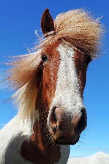 Horse Head in Iceland-TTstudio-Photographic Print