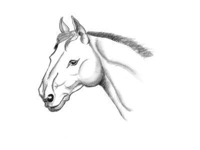 Horse Head Sketch-jim80-Art Print