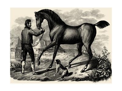 Horse & Horsemen VI- Brodtmann-Art Print