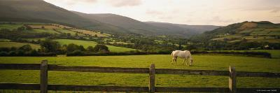 Horse in a Field, Enniskerry, County Wicklow, Republic of Ireland--Photographic Print