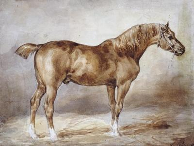 https://imgc.artprintimages.com/img/print/horse-in-a-stable_u-l-o7prl0.jpg?p=0