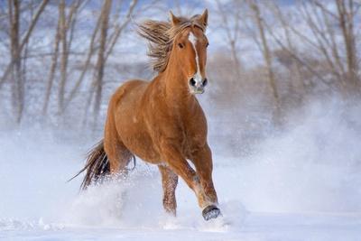 https://imgc.artprintimages.com/img/print/horse-in-snow_u-l-q1gqilp0.jpg?p=0