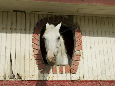 Horse in Stables on Way to Monteverde, Costa Rica, Central America-R H Productions-Photographic Print