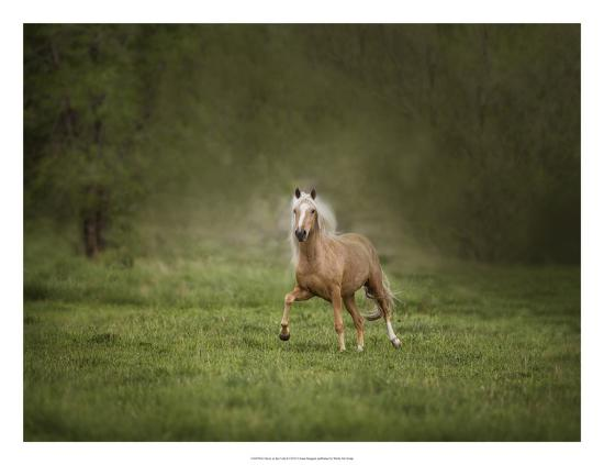 Horse in the Field II-Ozana Sturgeon-Art Print