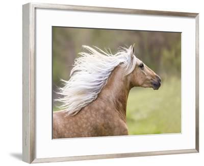 Horse in the Field III-Ozana Sturgeon-Framed Art Print