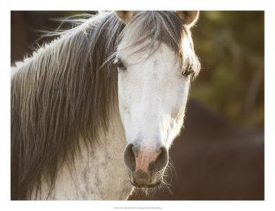 Horse in the Field IV-Ozana Sturgeon-Art Print