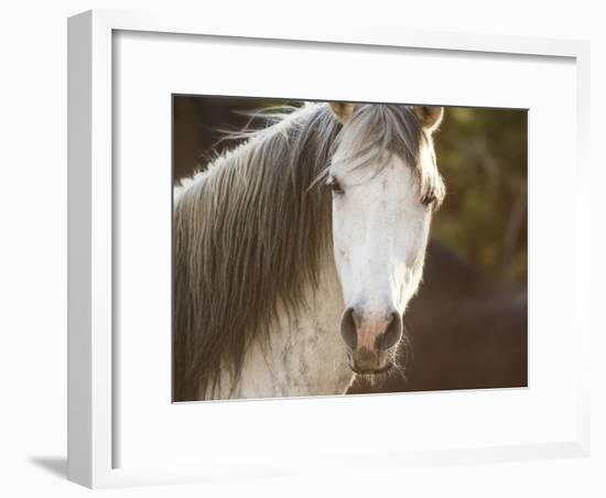 Horse in the Field IV-Ozana Sturgeon-Framed Photographic Print
