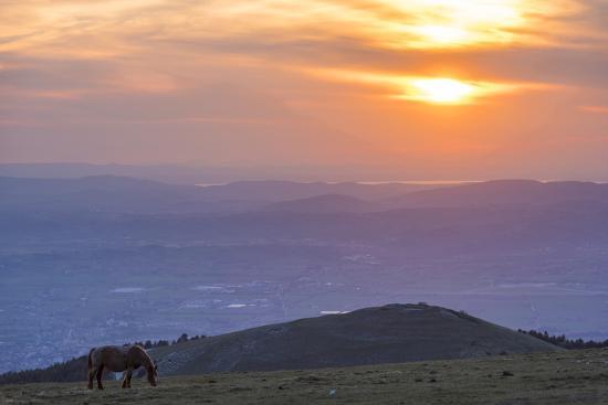 Horse in the fields, Mount Subasio, Umbria, Italy, Europe-Lorenzo Mattei-Photographic Print