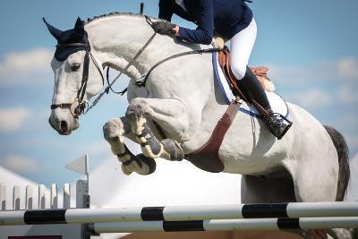 Horse Jumping-Catwalk Photos-Photographic Print