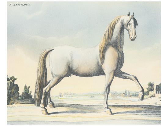 Horse L'Andaloux--Art Print