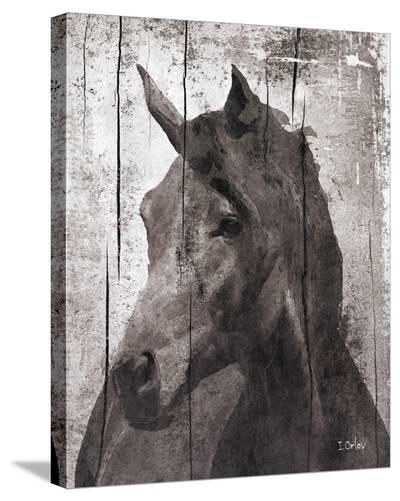 Horse Lemuse--Stretched Canvas Print