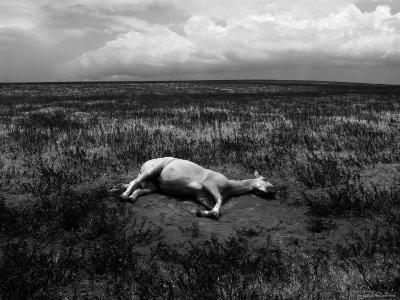 Horse Lying on Side in Field-Krzysztof Rost-Photographic Print