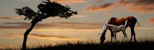 Horse Mare and a Foal Grazing by Tree at Sunset