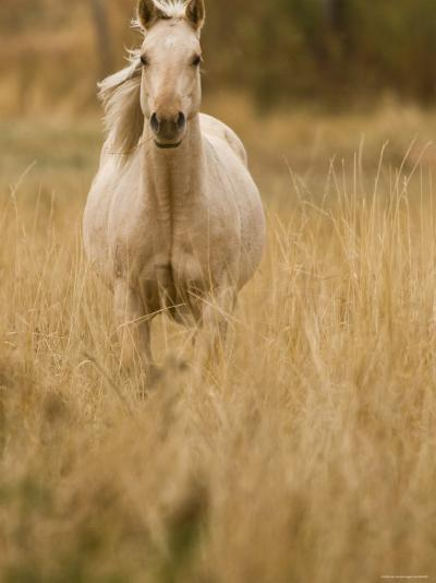 Horse, Montana, USA-Russell Young-Photographic Print