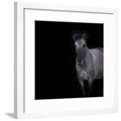 Horse on black background-Sue Demetriou-Framed Photographic Print