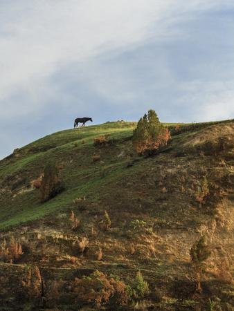 https://imgc.artprintimages.com/img/print/horse-on-hill-trnp_u-l-q10pl5c0.jpg?p=0