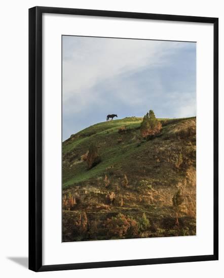 Horse on Hill (TRNP)-Galloimages Online-Framed Photographic Print