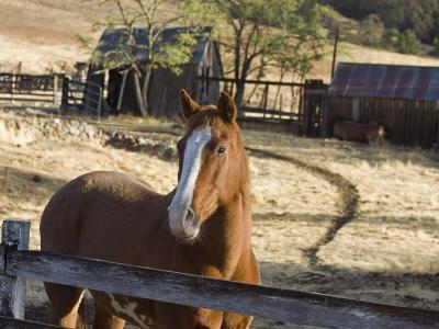 Horse on Santa Rosa Creek Road, Cambria, California-Rich Reid-Photographic Print