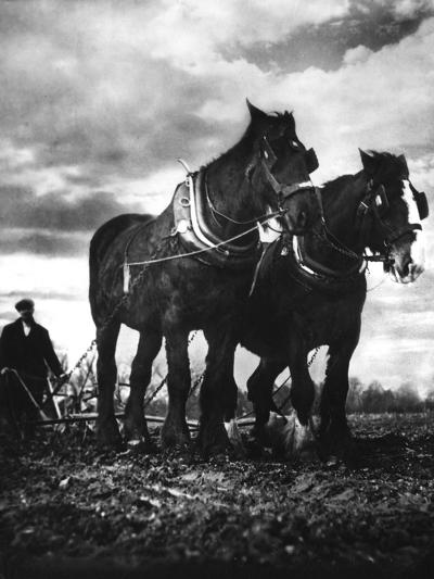 Horse Plough--Photographic Print