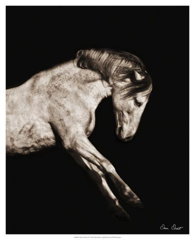Horse Portrait IV-David Drost-Giclee Print