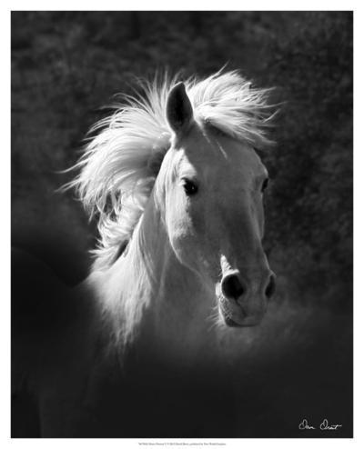 Horse Portrait V-David Drost-Giclee Print