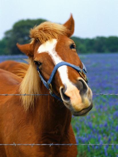 Horse Portrait-Darrell Gulin-Photographic Print
