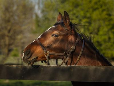https://imgc.artprintimages.com/img/print/horse-portrait_u-l-q10pl3u0.jpg?p=0