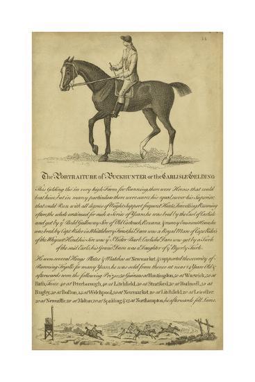 Horse Portraiture IV--Art Print