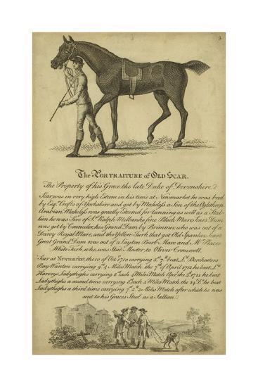 Horse Portraiture VIII--Art Print