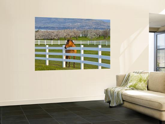 Horse Poses By Flathead Cherry Orchard Near Polson, Montana, USA-Chuck Haney-Wall Mural