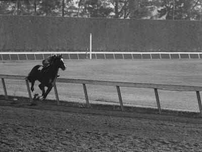 Horse Ridan During Race--Photographic Print