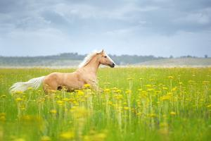 Horse Running in Field