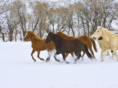 Horse Running, Shell, Wyoming, USA-Terry Eggers-Photographic Print