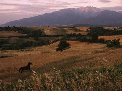 Horse Running Through Fields at the Base of Mount Olympus-James L^ Stanfield-Photographic Print