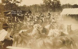 Horse Sale, Miles City, Montana
