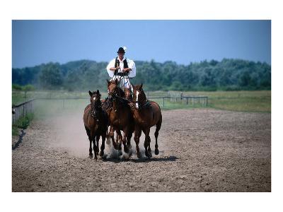 Horse show in Bugac, Bacs-Kiskun, Hungary--Art Print