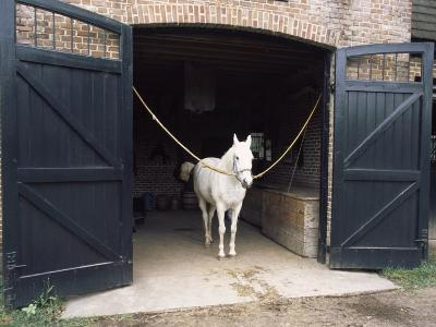 Horse Standing in a Stable, Middleton Place, Charleston, Charleston County, South Carolina, USA--Photographic Print