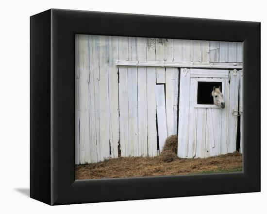 Horse Sticking Head out Barn Window-Kevin R^ Morris-Framed Premier Image Canvas